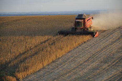 تفسير حلم رؤية الحصاد وجني المحاصيل في المنام