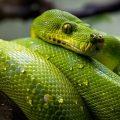 تفسير حلم رؤية الأفاعي أو الحيات في المنام Snakes