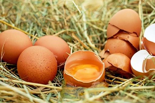 تفسير حلم رؤية بيض الدجاج في المنام لابن سيرين eggs