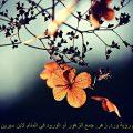 تفسير حلم رؤية ورد, زهر, جمع الزهور أو الورود في المنام لابن سيرين Flower