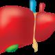 التهاب الكبد الأنواع والأعراض والعلاج