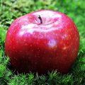 تفسير حلم أكل التفاح ومعنى قطف ثمرة تفاح في المنام لابن سيرين