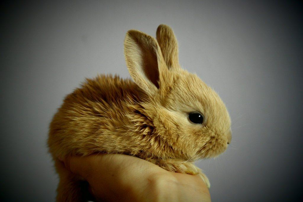 تفسير حلم رؤية الأرنب في المنام لابن سيرين خير أم شر