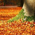 تفسير رؤية تساقط الأشجار العالية في المنام أو الحلم